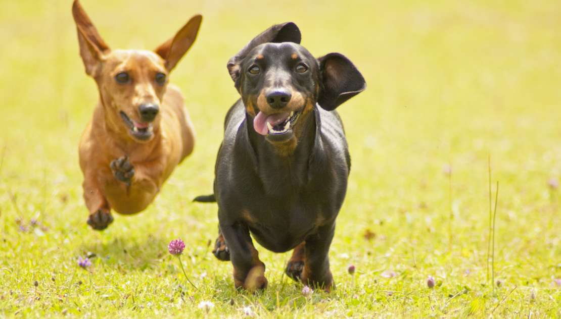 New Best Friends The Best Dog Breeds For First Time Owners My Pet And I
