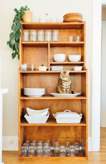 cat sat on shelf