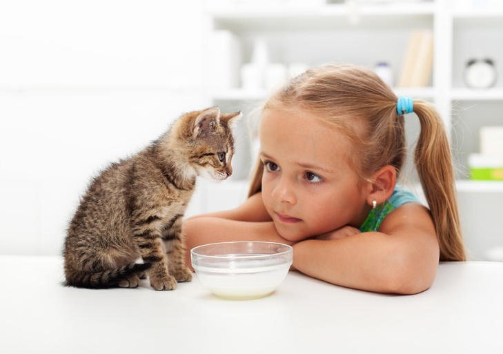 Young girl with cute kitten and feeding bowl