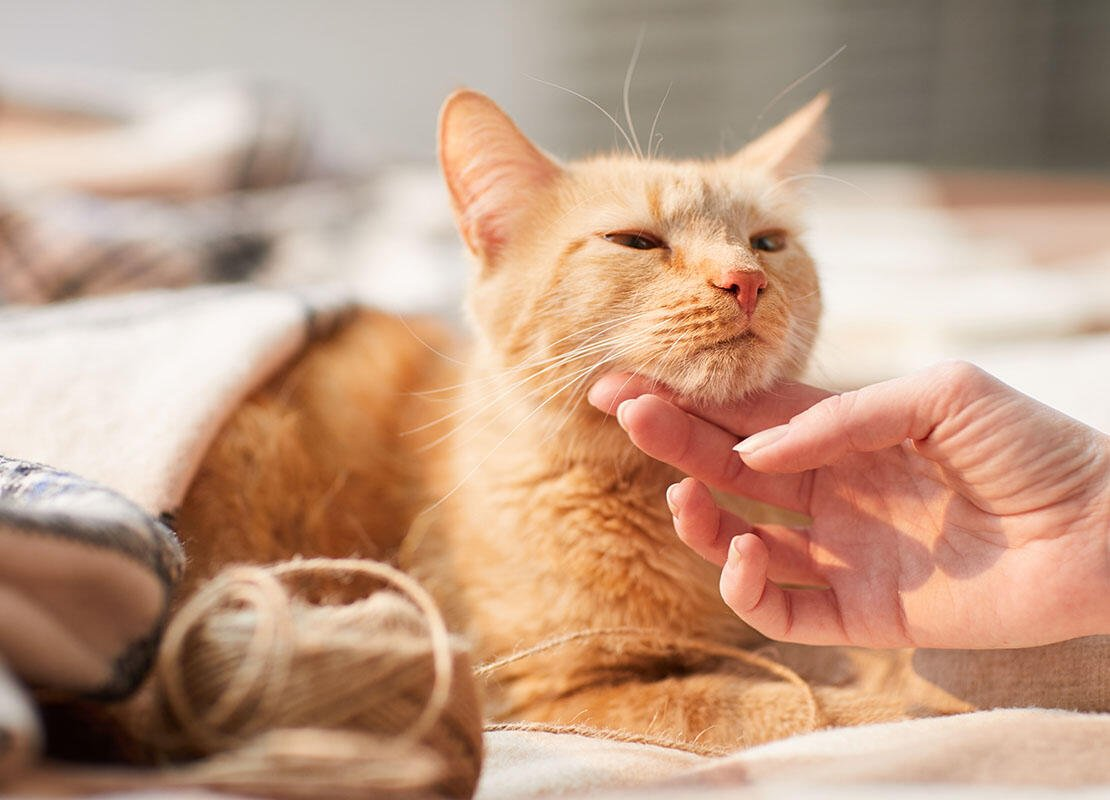 pet owner stroking cat