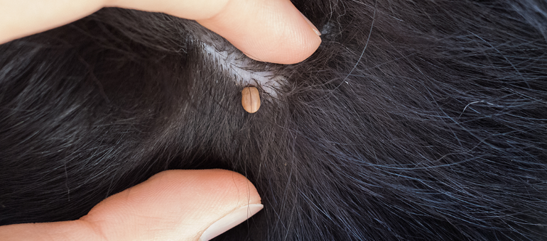 How to tell if your dog has a tick, scab or skin tag   My Pet and I