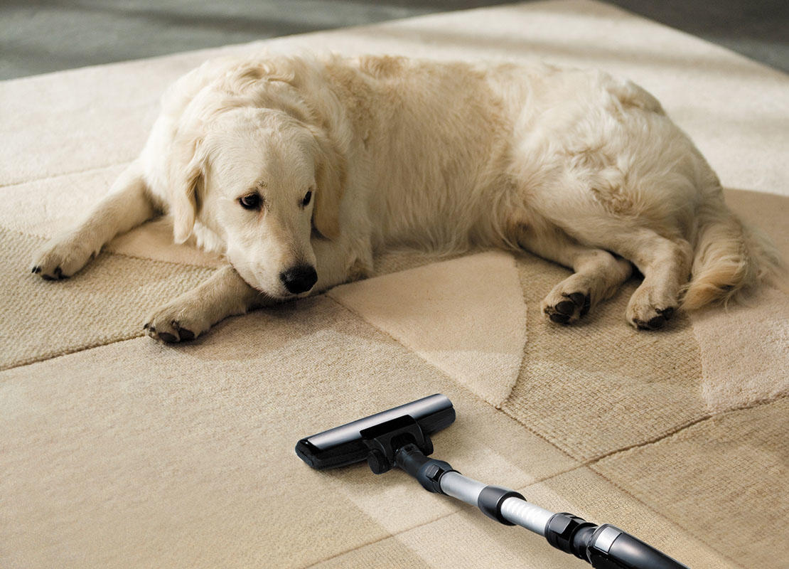 Dog on floor whilst owner is vacuuming for fleas