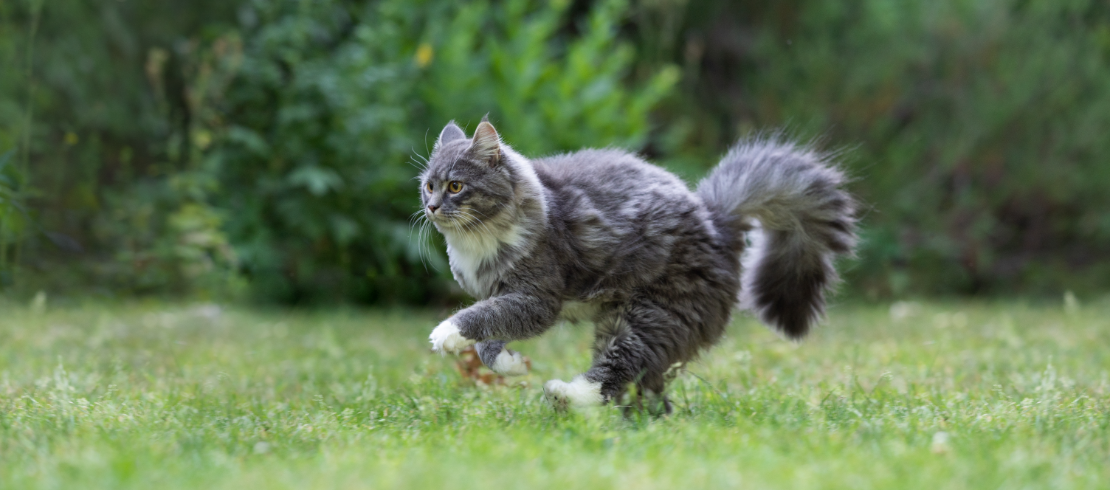 Cat playing outside