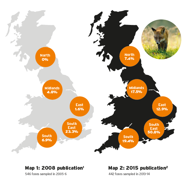 Map of foxes infected with lungworm in Britain