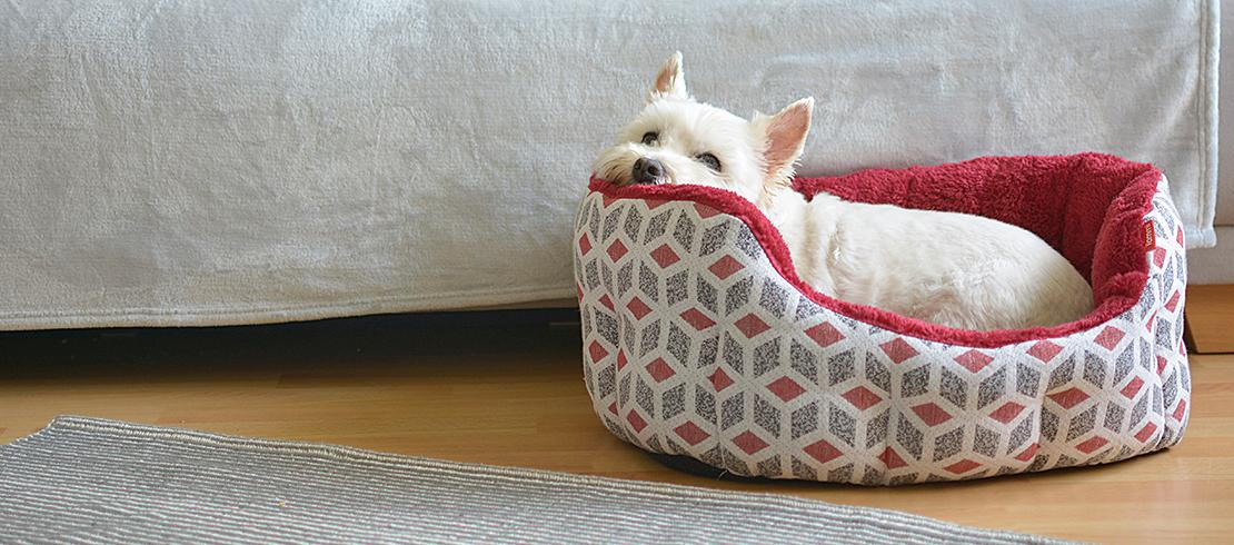 dog resting in its dog bed