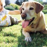 Young boy and dog play on grass