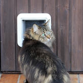 Cat stands nervously in front of cat flap