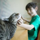 Young boy strokes cute cat