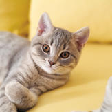 Cute young cat on sofa
