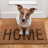 Cute adopted dog sits on a welcome mat