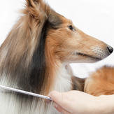 Health_dog grooming