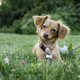 cute puppy laying on the grass