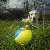 Dog watches snail on ball