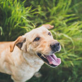 Dog in long grass looking happy