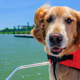 Dog wears life jacket on boat