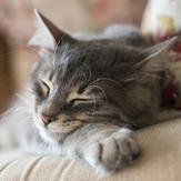 Cute kitten sleeps on sofa