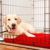 Labrador sitting comfortably in his crate