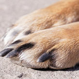 Close-up of dog's claws