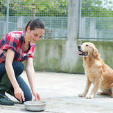 Woman and dog in dog boarding service