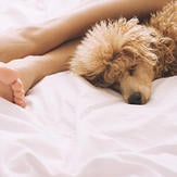 Happy dog lying on bed with owner