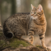 Cats that like to hunt are at particular risk of a tapeworm infection