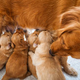 Nursing puppies can pick up worms from their mother's milk